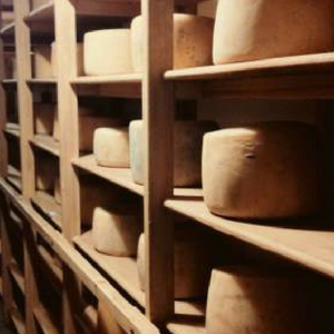 Colonia Cheeses